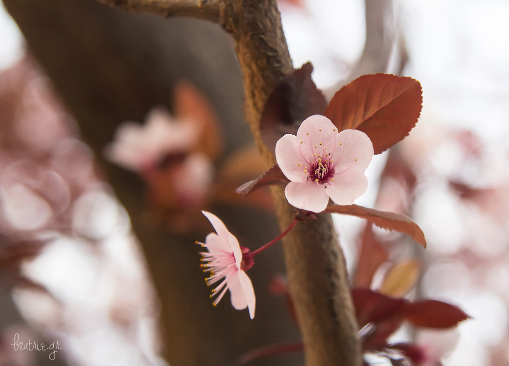 Primavera02web